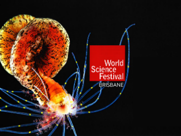 World Science Festial