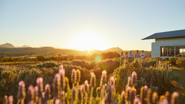 Kooroomba Lavender Farm Incentives